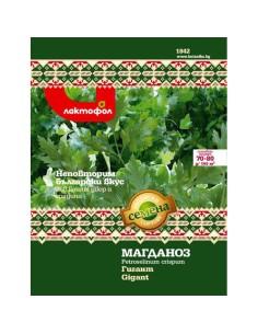 Семена магданоз Гигант Лактофол Ботаника - 1