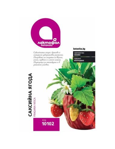 Семена саксийна ягода Лактофол Ботаника - 1