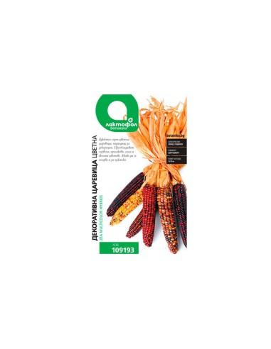 Декоративна цветна царевица Лактофол Ботаника - 1