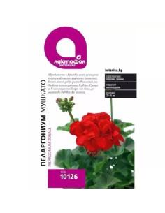 Семена Пеларгониум / Мушкато Лактофол Ботаника - 1