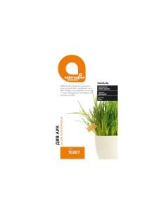 Семена Лучена трева Лактофол Ботаника - 1