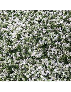 Изкуствена трева за стена 40х60 см ситно бяла ДРУГИ - 1