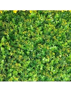 Изкуствена трева за стена 40/60 DIY-AP-67 ДРУГИ - 1