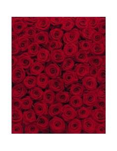 Фототапет червени рози...